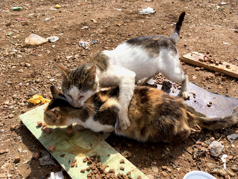 Street Cats of Vis : Helping People Help Cats